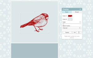 photo of bird overlay