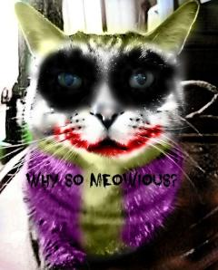 photo of cat made into The Joker